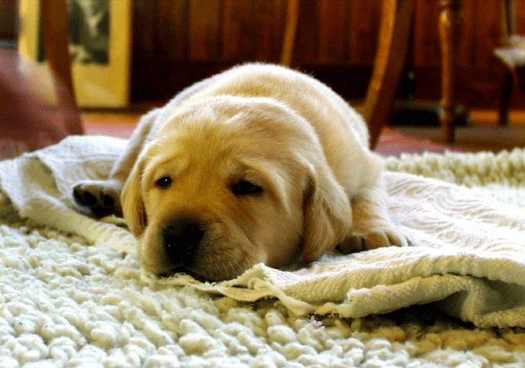 How Often Should You Clean Your Carpet & Area Rugs?